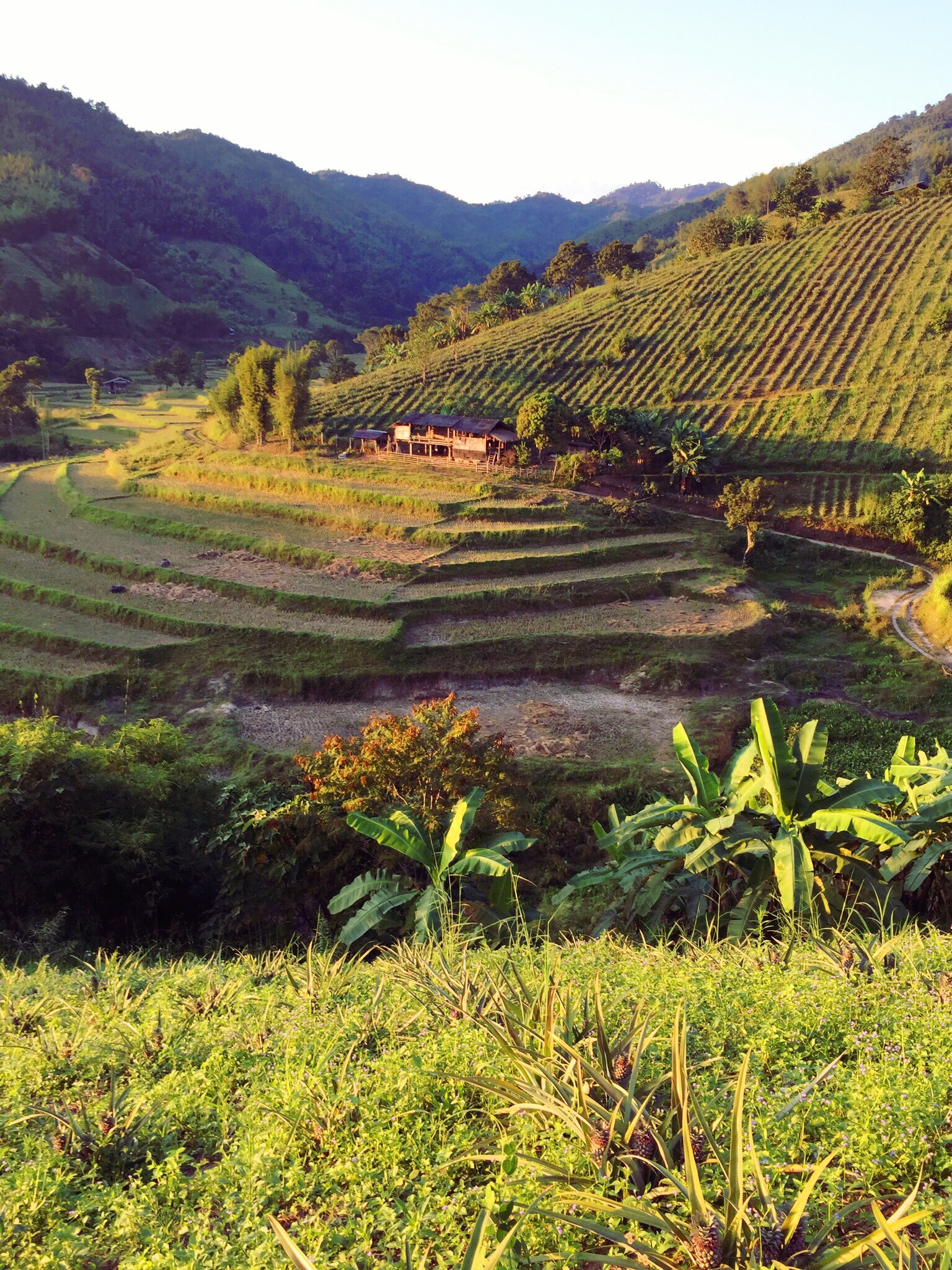 """Paysages des cultures autour de """"la Maison""""- Province Chiang Rai-Thaïlande du nord"""