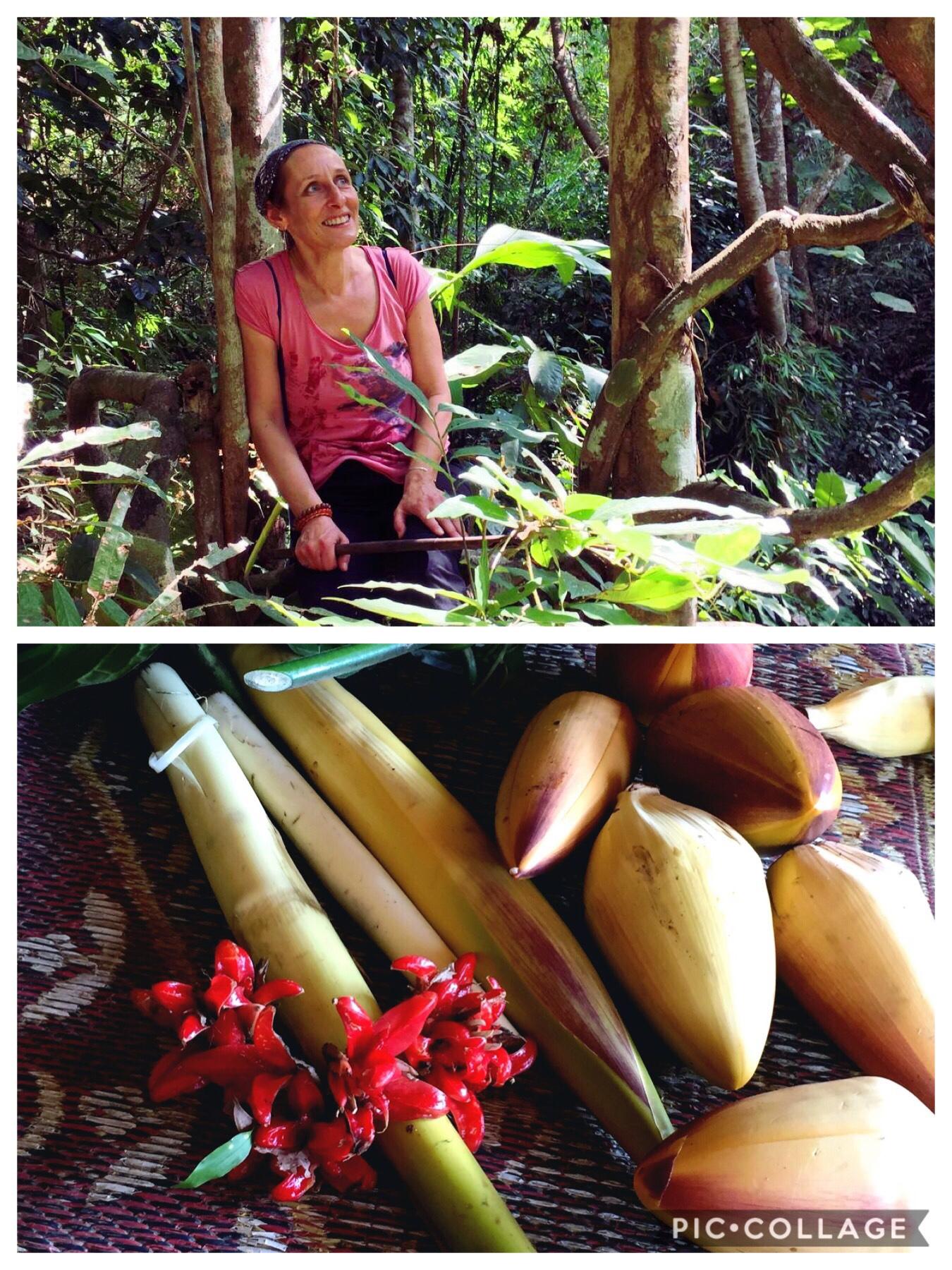 Sortie en jungle et cueillette de végétaux comestibles (fleurs de bananiers, fleurs, plantes et pousses de bambou)-Province de Chiang Rai-Thailande du nord