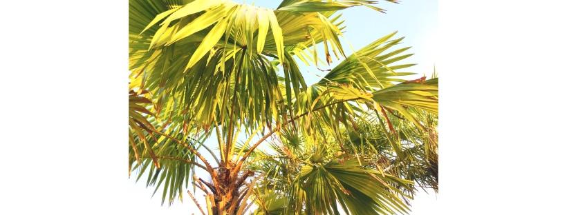 Bel été sous les palmiers